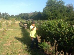 Miguel uncovering the North Lomanto Block